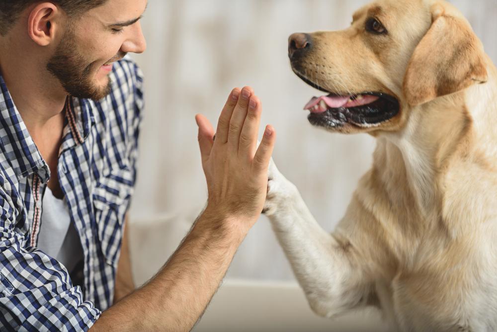 Генетики рассказали, как рассчитать человеческий эквивалент возраста собаки