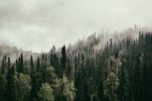 Тайга нагревает планету