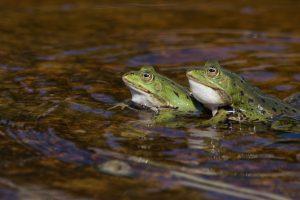 Гомосексуализм и бисексуальность сыграли важную роль в эволюции животных