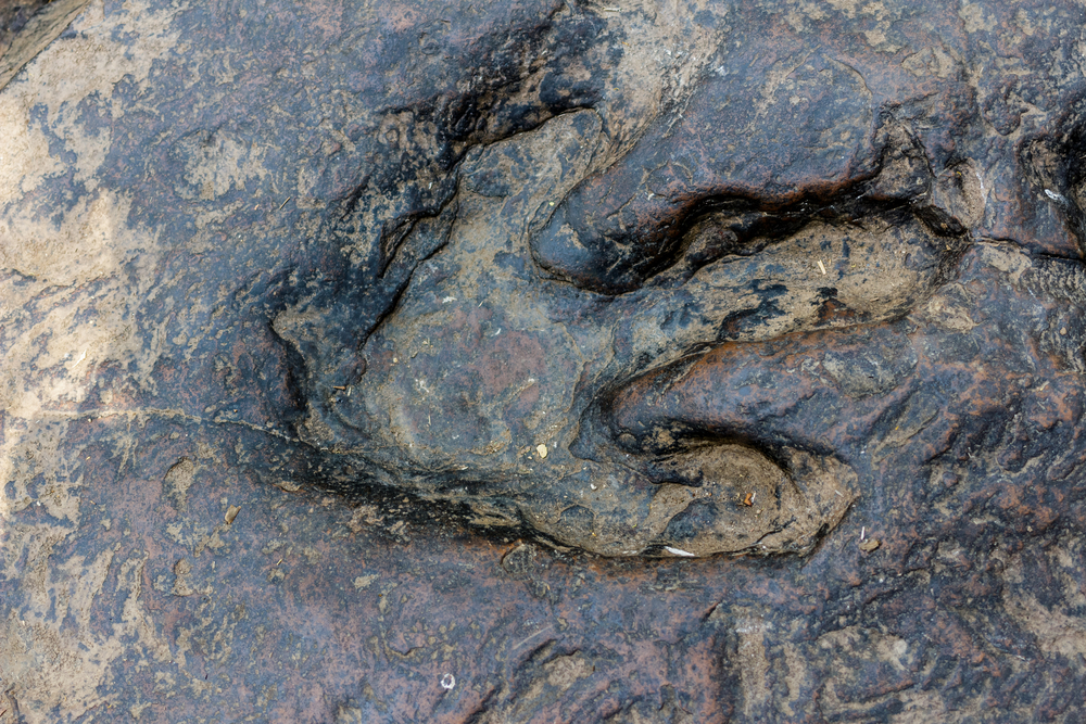 На Аляске обнаружили многочисленные следы динозавров