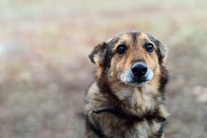 Ученые объяснили, почему нельзя кричать на собак