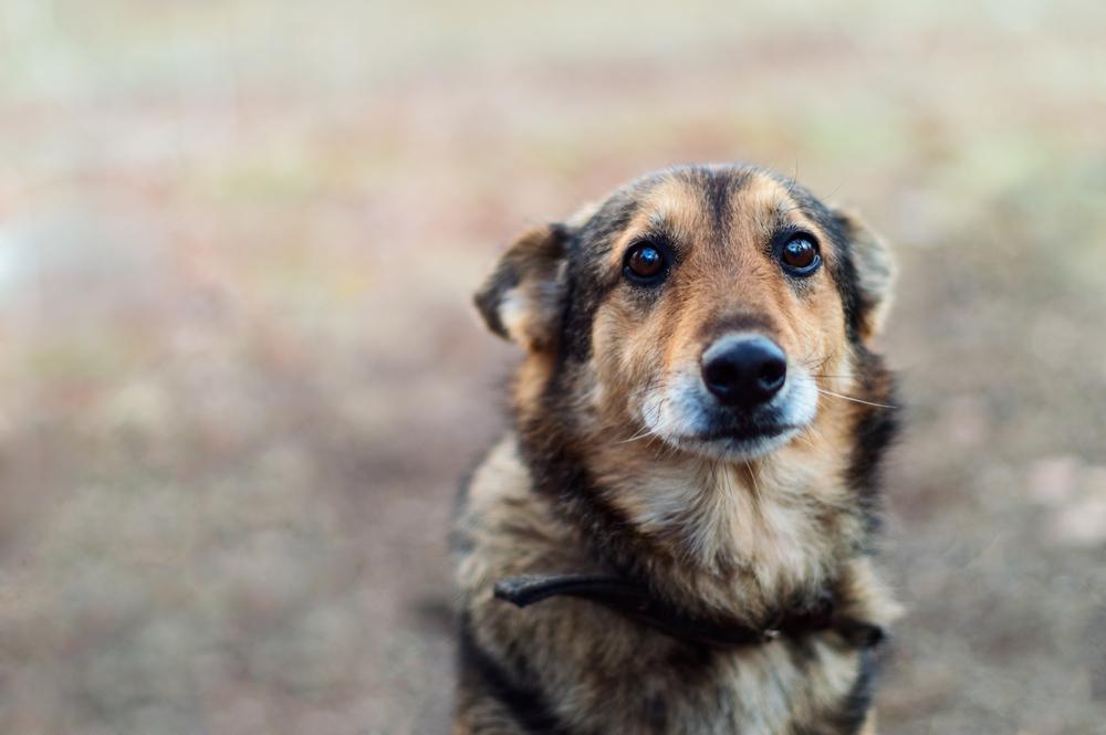 Ученые объяснили, почему нельзя кричать на собак.Вокруг Света. Украина