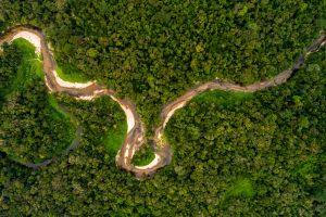 За год в бразильской Амазонии вырубили 30% лесов