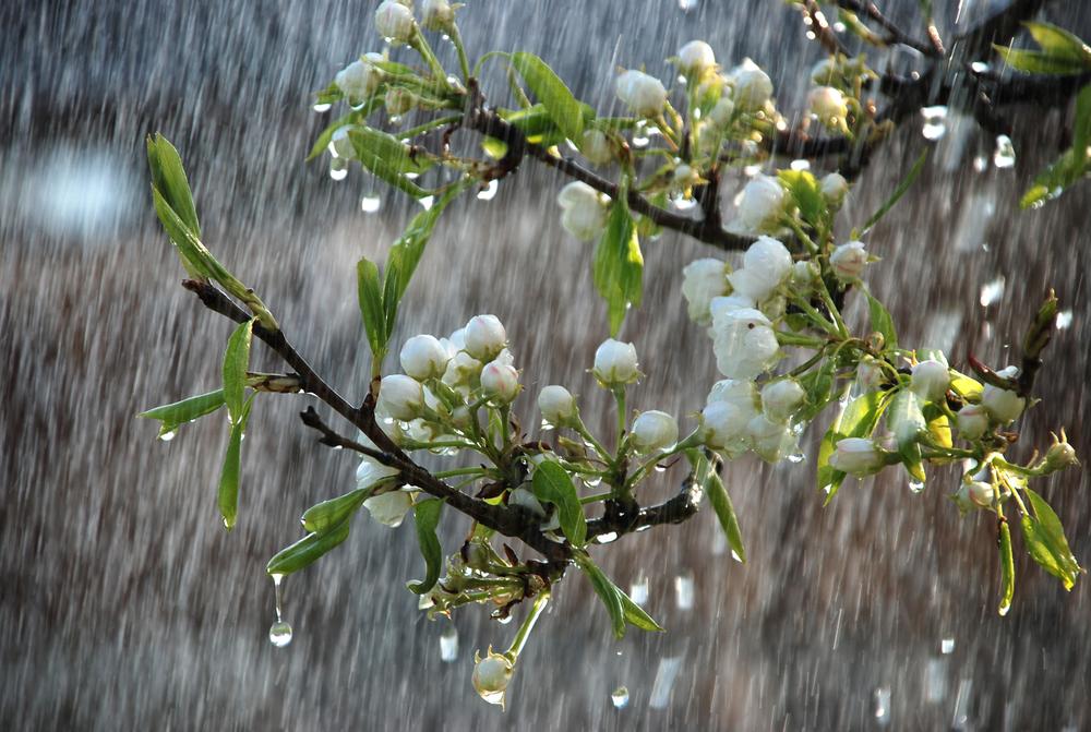 Растения испытывают панику, когда идет дождь: исследование