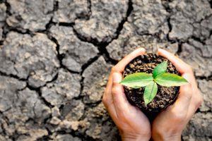В Германии фермеры судятся с правительством из-за глобального потепления