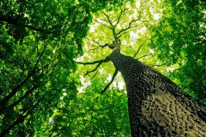 Как выжить лесам при глобальном потеплении? – исследование