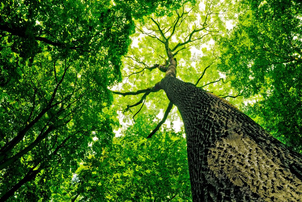 Как выжить лесам при глобальном потеплении? – исследование.Вокруг Света. Украина