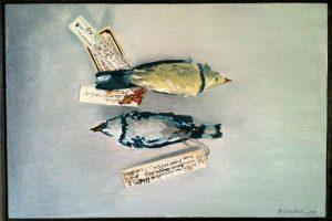 Птицы сократились в размерах из-за изменения климата