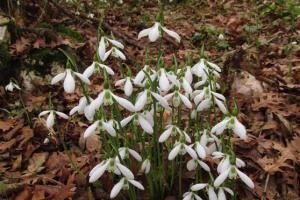 Соцсети помогают ботаникам находить новые виды