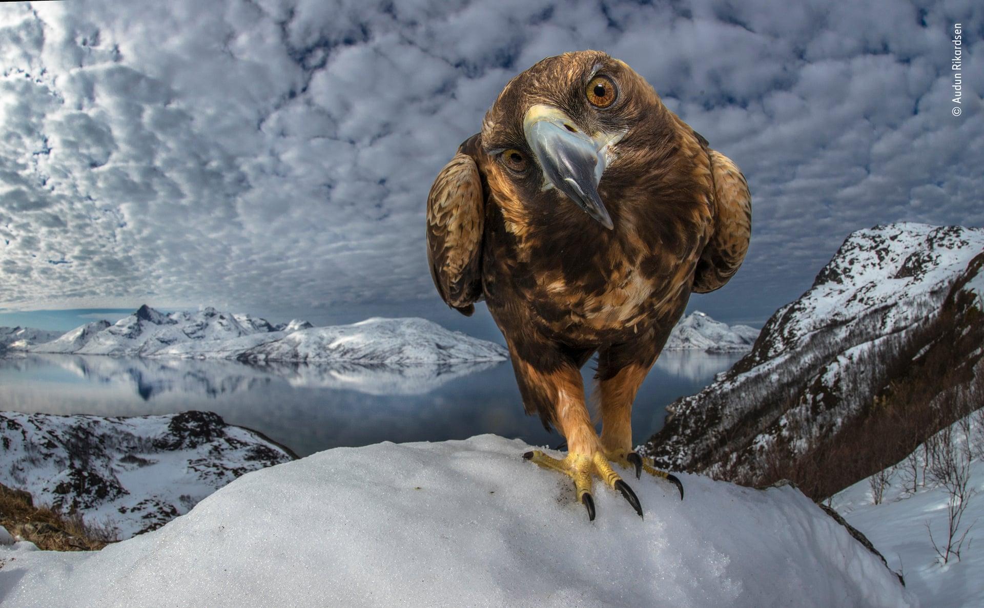 Лучший фотограф дикой природы: топ-10 впечатляющих снимков конкурса.Вокруг Света. Украина