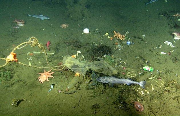 На дне Тихого океана найдены загадочные углубления.Вокруг Света. Украина