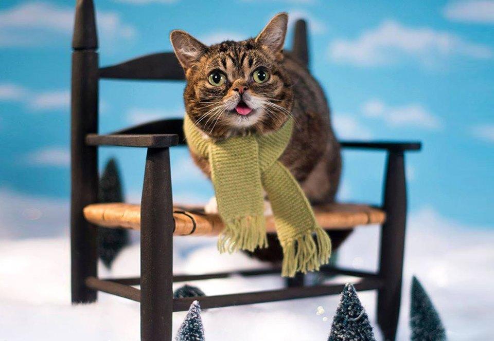 Умерла самая знаменитая кошка интернета Лил Баб