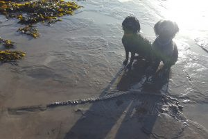 В Британии мужчина с собаками нашел на пляже скелет ихтиозавра