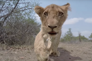 Встреча диких зверей с GoPro — видео