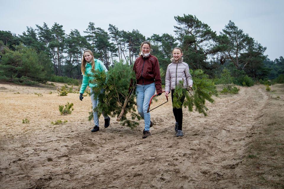 В заповеднике Нидерландов разрешили бесплатно рубить елки к Рождеству