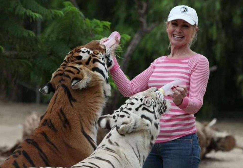 В Калифорнии два тигра серьезно ранили зоозащитницу