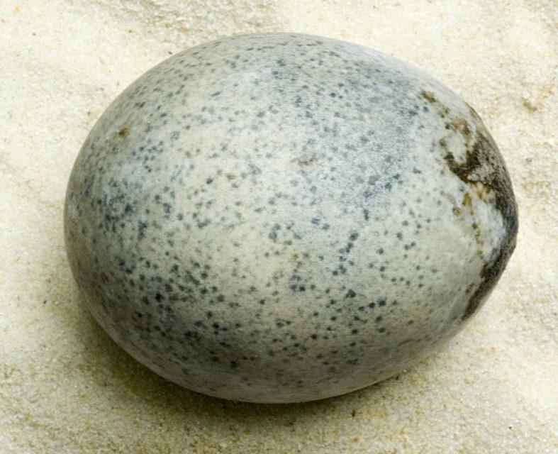 Археологи случайно разбили три 1700-летних яйца