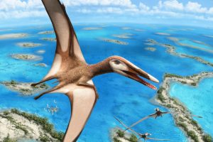 Исследователи идентифицировали новый вид птерозавра