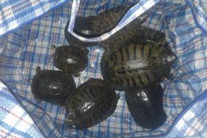 В Виннице спасли черепах, отпущенных на свободу хозяевами