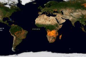 Все лесные пожары на Земле показали в видео