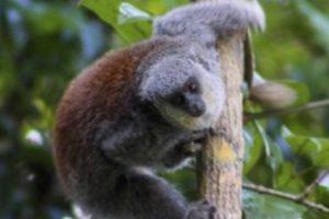В джунглях Амазонки нашли новый вид обезьян