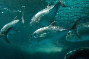 Изменение климата истощает кислород Мирового океана