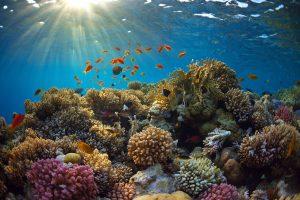 Ученые восстанавливают коралловые рифы с помощью подводных громкоговорителей