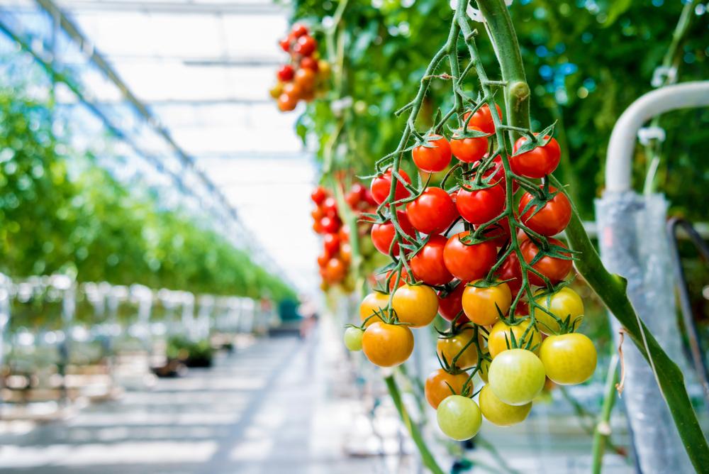 Во Франции запретили тепличные овощи и фрукты