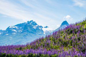 2019 год стал для Аляски рекордно теплым