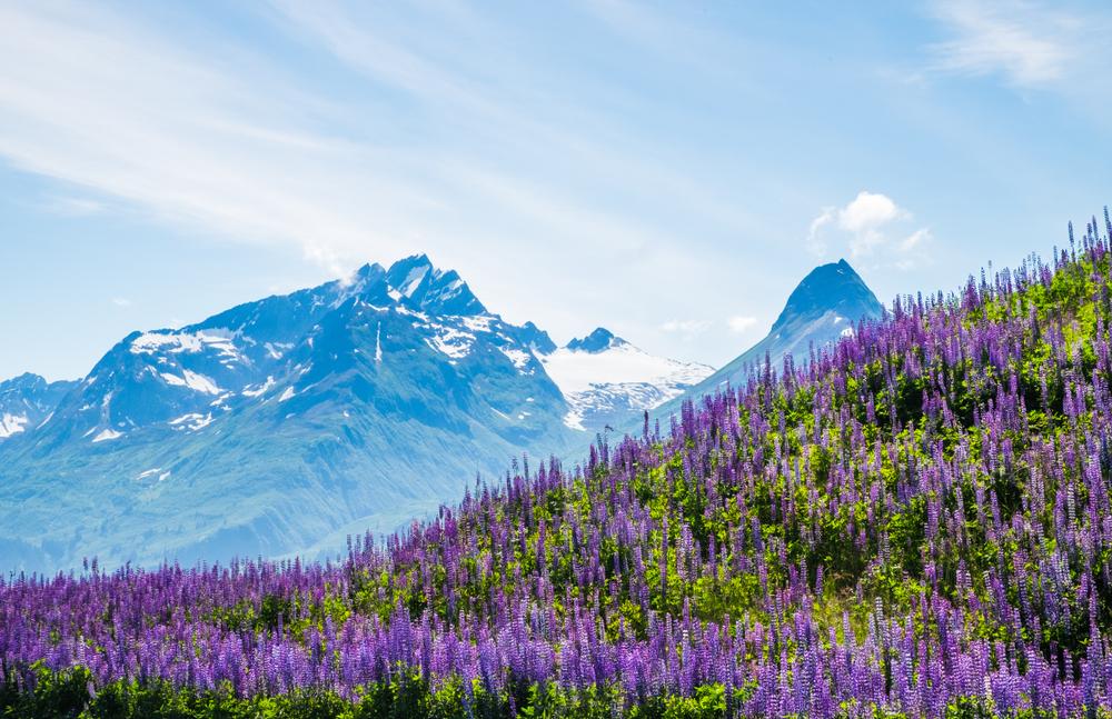 2019 год стал для Аляски рекордно теплым.Вокруг Света. Украина