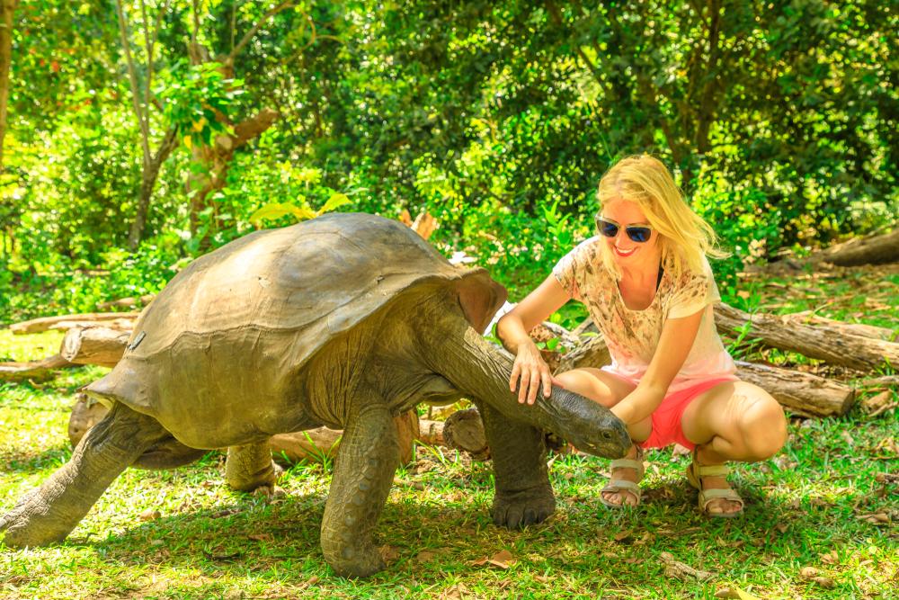 Черепахи гораздо умнее, чем мы думали.Вокруг Света. Украина