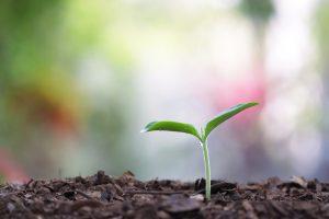 Растения тоже кричат, испытывая стресс