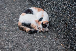 В Николаеве котов признали частью экосистемы города