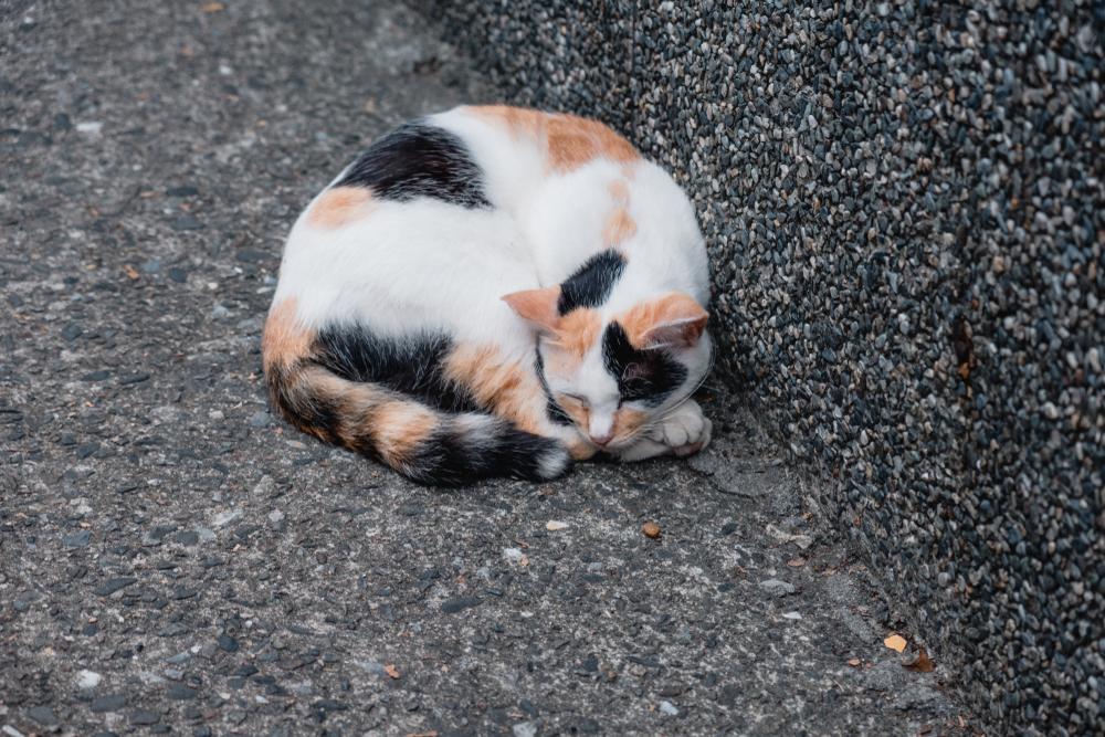 В Николаеве котов признали частью экосистемы города.Вокруг Света. Украина