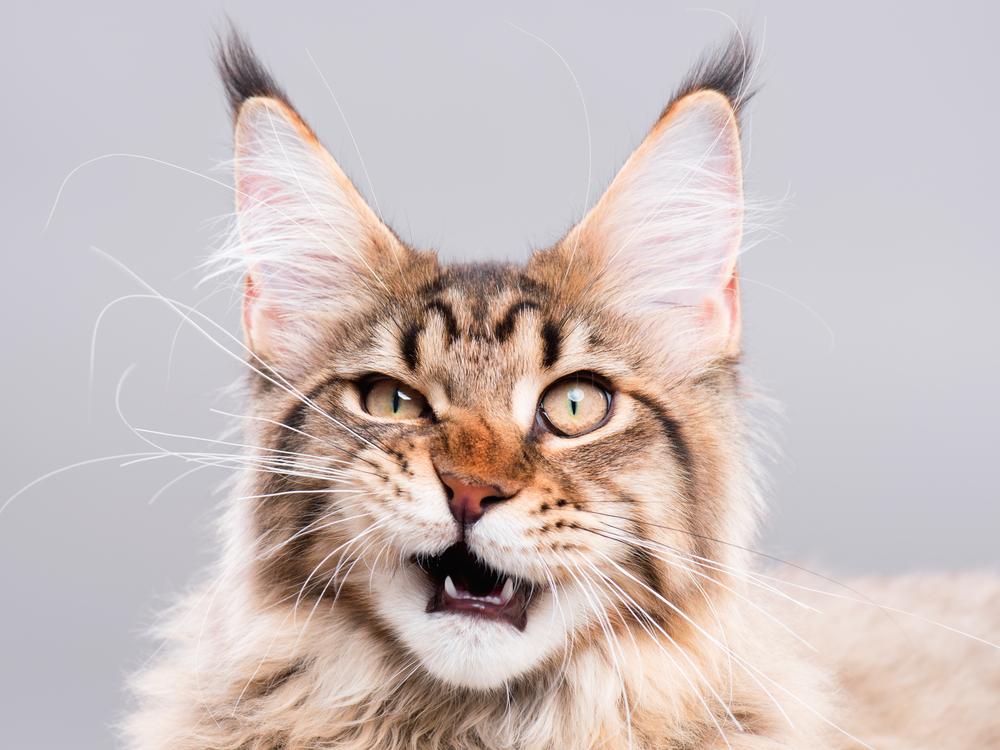 У кошек есть мимика