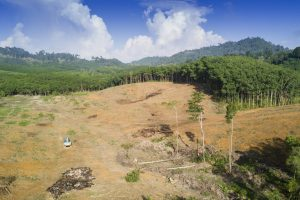 Вырубка лесов бразильской Амазонии выросла вдвое