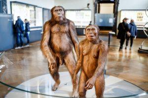 Антропологи установили, когда вымер Homo erectus
