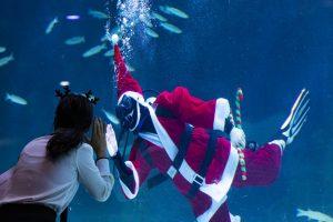 В Южной Корее Санта-Клаусы опустились на дно