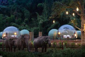 Пузыри джунглей: В Таиланде открылись прозрачные отели