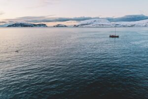 Плавание с косатками в Норвегии: личный опыт