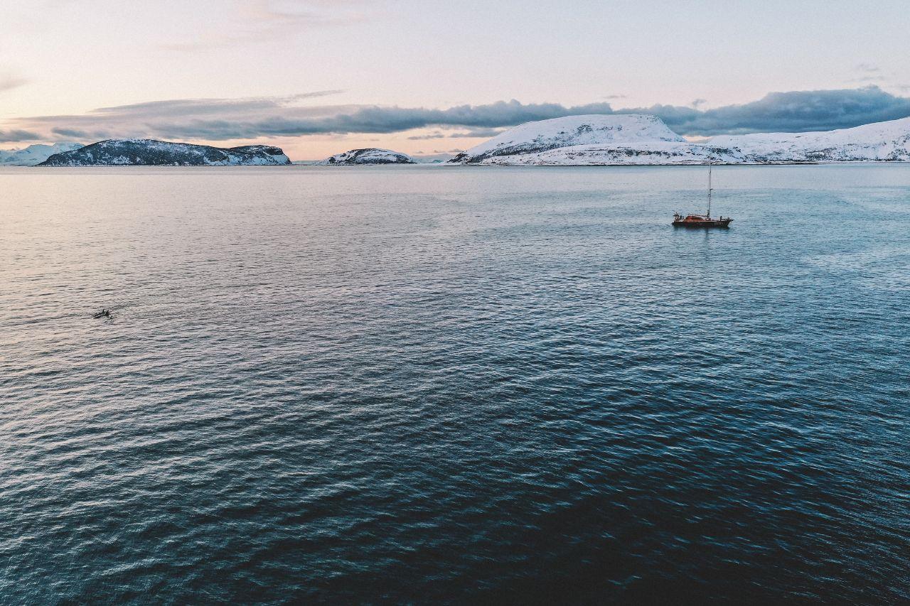 Плавание с косатками в Норвегии: личный опыт.Вокруг Света. Украина