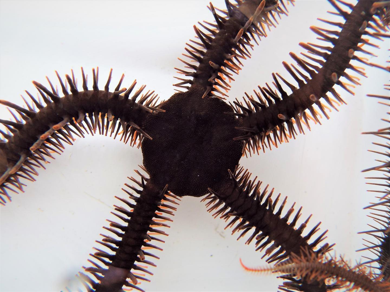 Англичане открыли новое морское животное, которое видит без глаз