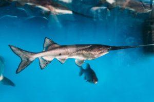 Назван первый вид рыб, который вымер после 2000 года