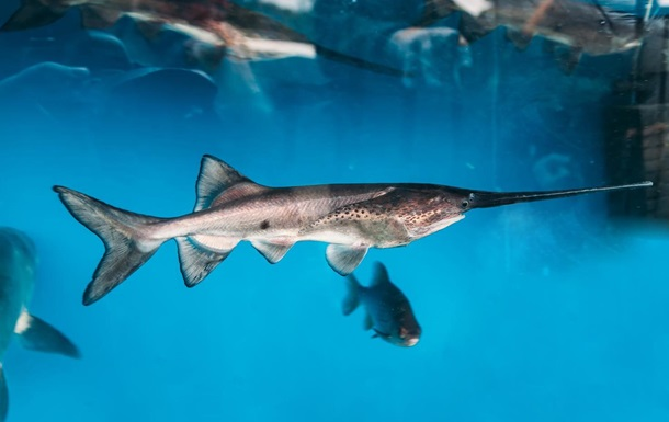 Назван первый вид рыб, который вымер после 2000 года.Вокруг Света. Украина