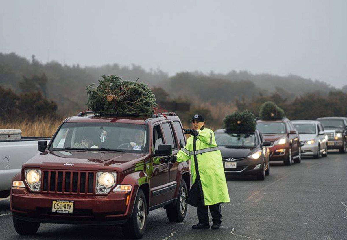 Жители Нью-Джерси отдали 2000 елок на восстановление дюн