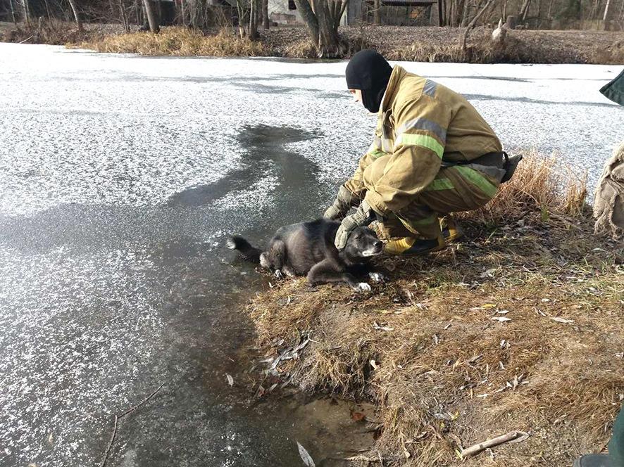 На Полтавщине спасатели достали из полыньи собаку