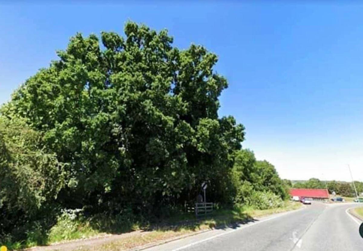 Как петиция английского поселка спасла многовековой дуб
