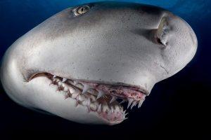 Дружелюбная акула Снути стала местной знаменитостью во Флориде