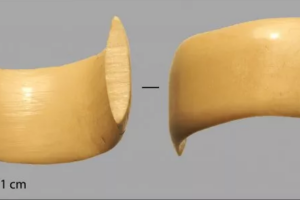 Редкая находка: в Дании обнаружили колечко времен каменного века