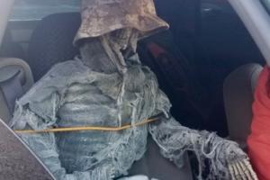 В США водитель возил в автомобиле скелет